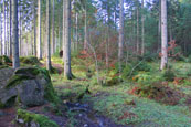 In the forest at The Hermitage, Perthshire, Scotland