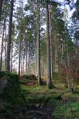 the forest at The Hermitage, Perthshire, Scotland