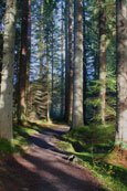 The forest walk at The Hermitage, Dunkeld, Perthshire, Scotland